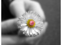 40057,地球,花,花,白色,花,壁纸图片