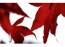 71200,地球,叶子,秋天,壁纸