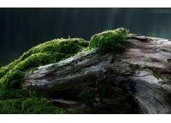 89929,地球,苔藓,壁纸