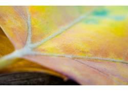 42221,地球,叶子,壁纸图片