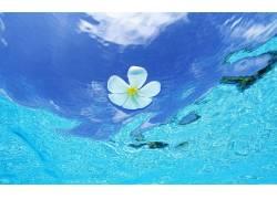 71521,地球,花,花,水,热带,海洋,壁纸图片