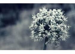 82559,地球,关闭,起来,植物,花,壁纸图片