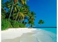 43469,地球,海滩,壁纸