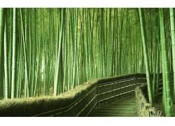 82564,地球,竹子,森林,壁纸