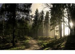 82927,地球,森林,太阳,小路,壁纸图片