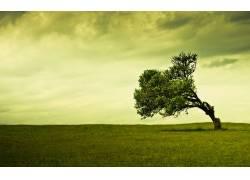 82931,地球,树,树,领域,绿色的,天空,壁纸图片