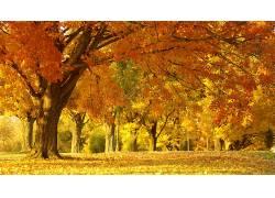 93261,地球,秋天,壁纸