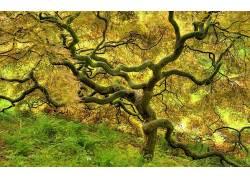93343,地球,树,树,水,壁纸