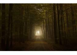 93642,地球,森林,壁纸