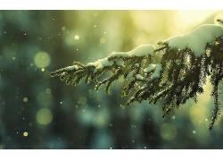 冬季雪树木美景壁纸图片