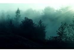 83974,地球,风景优美的,摄影,太阳,树,壁纸