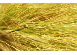 110657,地球,草,壁纸图片