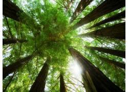 114233,地球,森林,壁纸