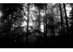 110663,地球,森林,壁纸图片