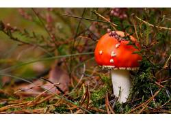 110832,地球,蘑菇,壁纸图片