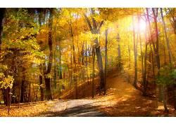 114688,地球,森林,秋天,自然,树,壁纸图片