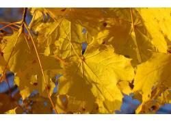 110922,地球,叶子,壁纸图片