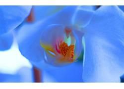 110950,地球,兰花,花,花,壁纸