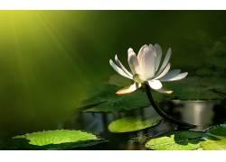 110962,地球,水,莉莉,花,花,壁纸