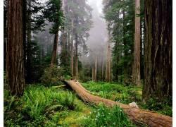 114774,地球,森林,壁纸图片
