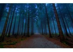 114827,地球,森林,壁纸图片