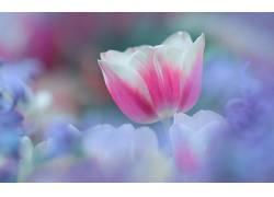 111088,地球,郁金香,花,花,壁纸图片