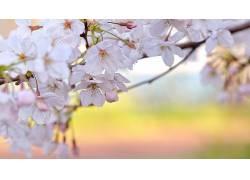 114952,地球,花,花,花,粉红色,花,壁纸