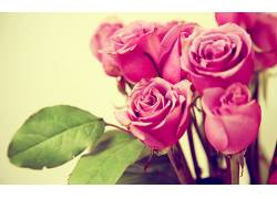 111173,地球,玫瑰,花,花,粉红色,玫瑰,壁纸