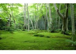 111191,地球,森林,壁纸图片