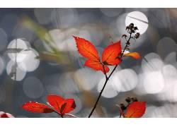 111927,地球,叶子,壁纸图片