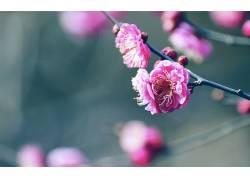 111928,地球,花,花,壁纸