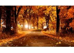 111986,地球,森林,壁纸图片