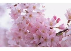 114991,地球,花,花,花,粉红色,花,壁纸