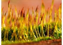 115137,地球,草,壁纸图片