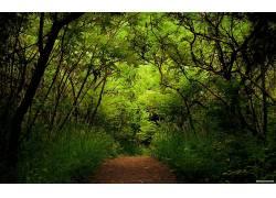 111263,地球,森林,壁纸图片