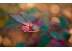 111280,地球,叶子,壁纸图片