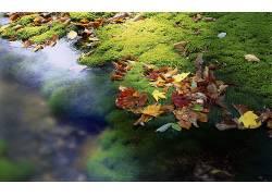 111287,地球,叶子,壁纸图片