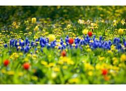 111321,地球,花,花,壁纸