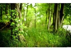 111525,地球,森林,弹簧,季节,壁纸图片