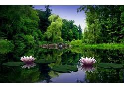 111567,地球,花,花,桥梁,树,壁纸图片