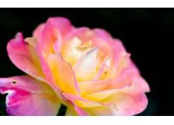 111759,地球,玫瑰,花,花,壁纸
