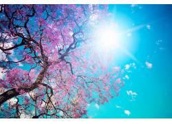 112347,地球,树,树,叶子,太阳,弹簧,壁纸