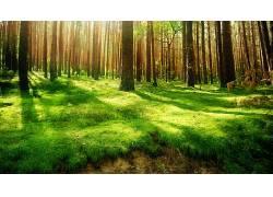 112487,地球,森林,壁纸图片