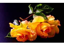 115752,地球,玫瑰,花,花,壁纸