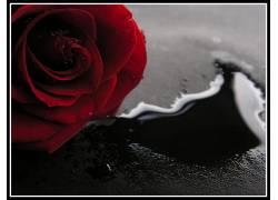 112864,地球,玫瑰,花,花,红色,玫瑰,壁纸