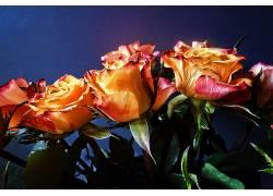 115769,地球,玫瑰,花,花,壁纸