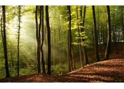 113341,地球,森林,壁纸图片