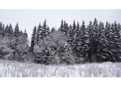 113588,地球,冬天的,树,森林,壁纸图片