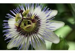 115894,地球,热情,花,花,花,壁纸图片