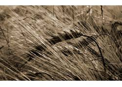 115950,地球,草,壁纸图片